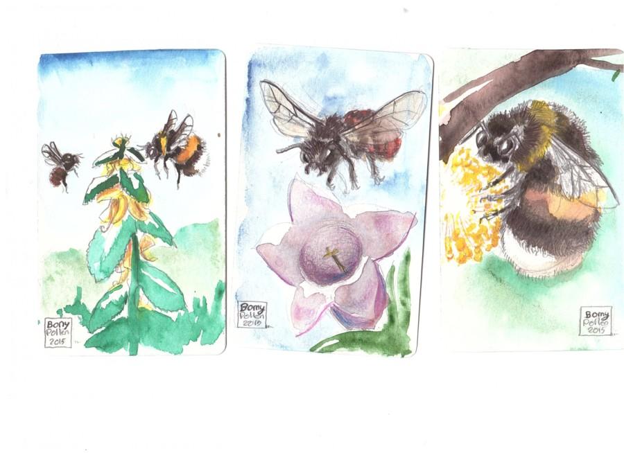 Des golden tickets dans Pollen !