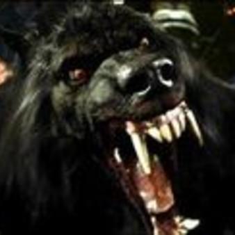 wolfodeiwolfy