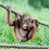 lux_monkey